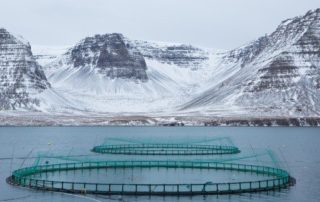 arnarlax-lokalitet-farm-raised-salmon