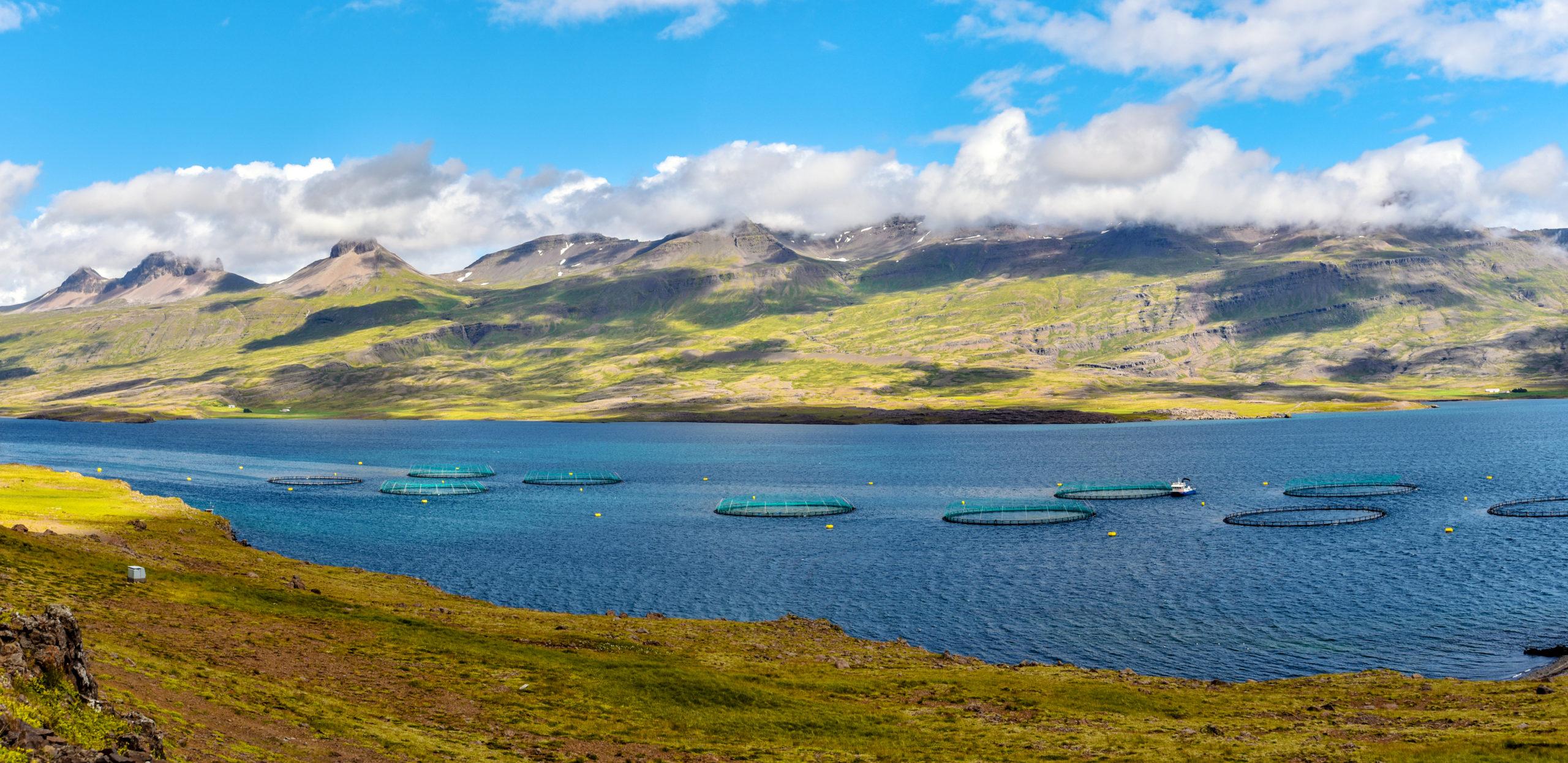 fish-farm-iceland
